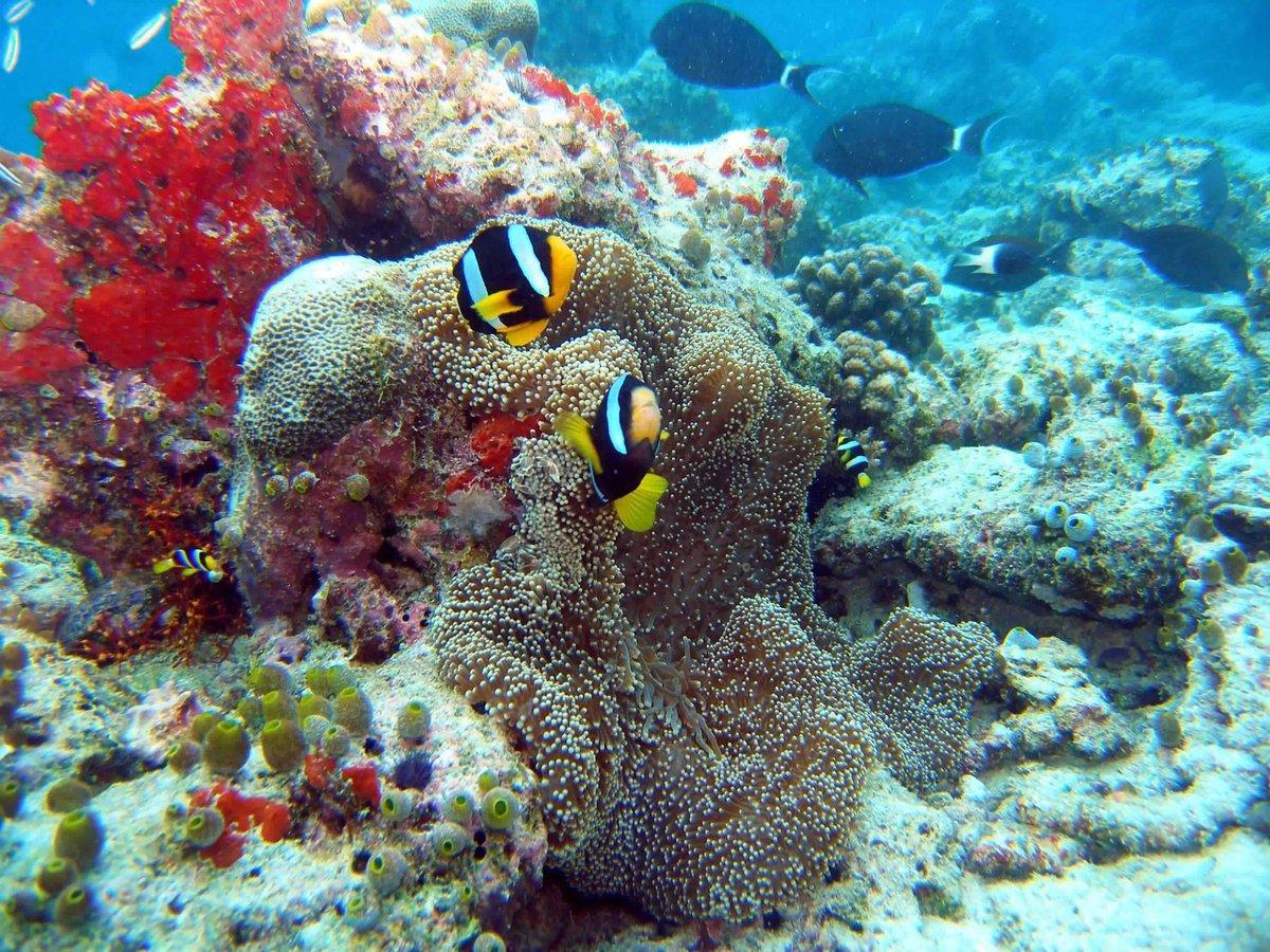 Египет море фото под водой
