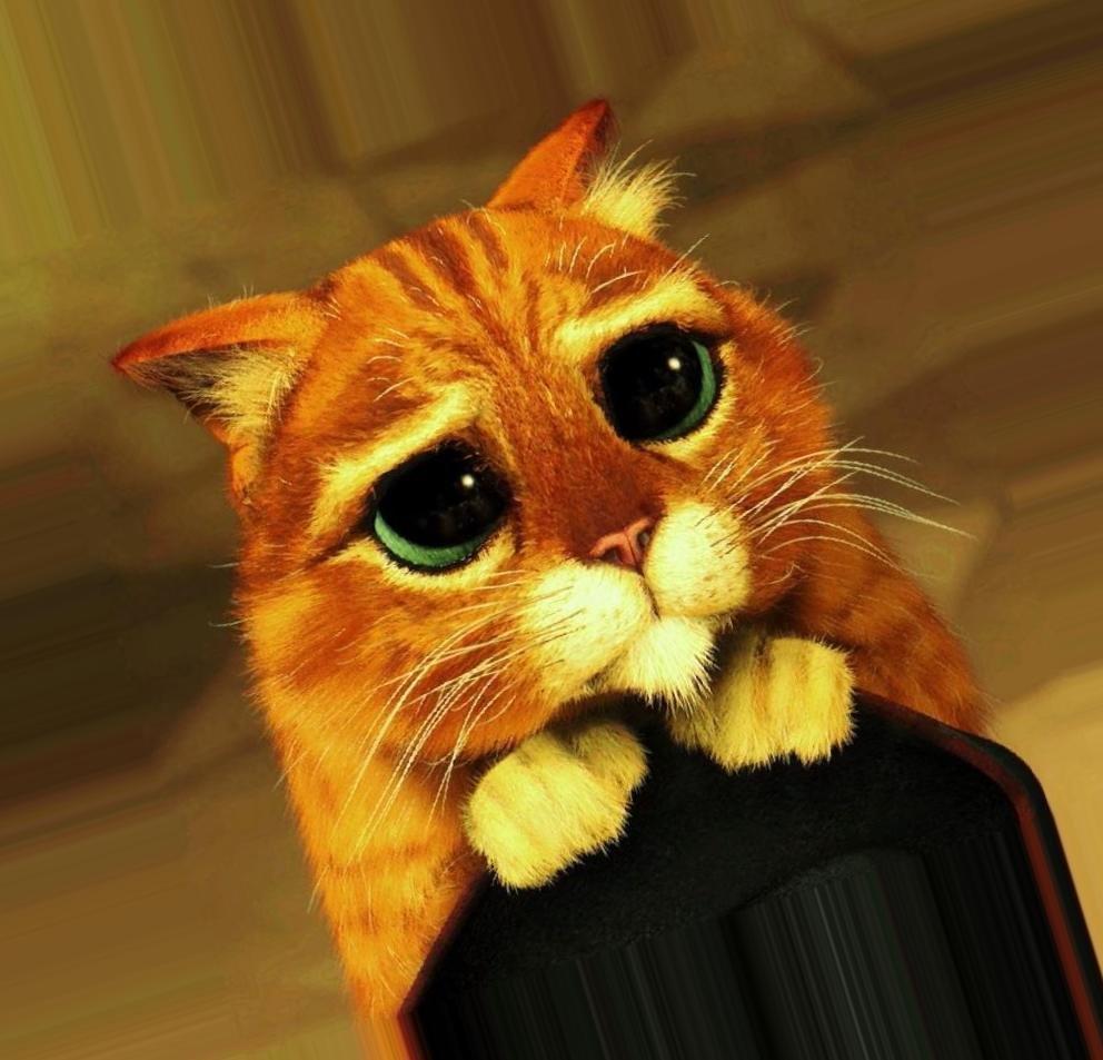 фото кота из шрека с грустными глазами шнурок компаса