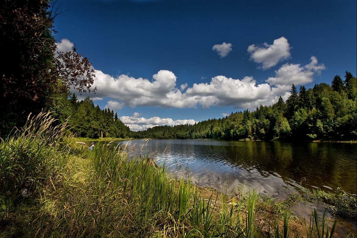 картинки лесные озера это
