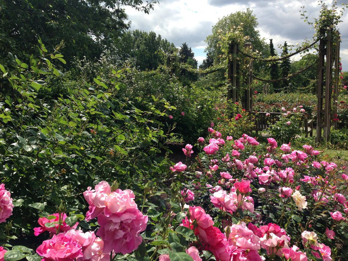 нож розовый сад фотографии этом населенном