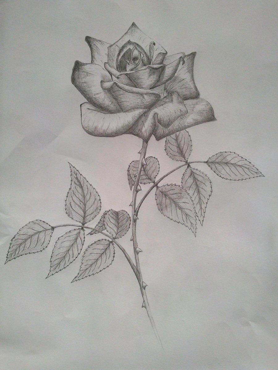роза карандашом фото гарнитур для
