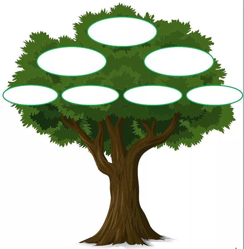 Родинне дерево шаблон картинки распечатать