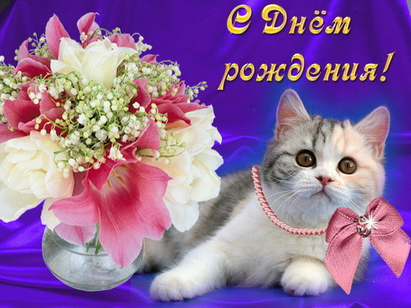 Надписью фото, открытки с днем рождения кошечки