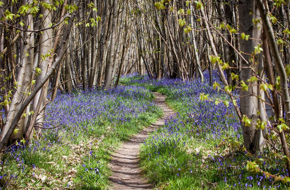 Природа весна с картинками