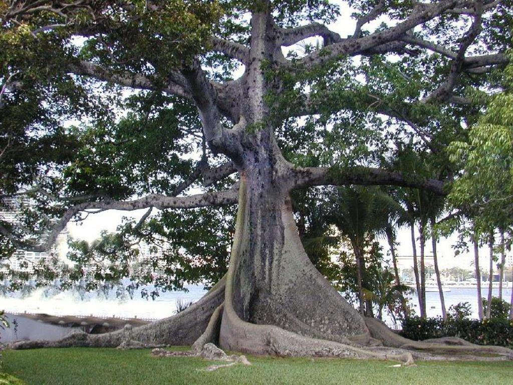 воспитали деревья южной америки фото испокон веков считались