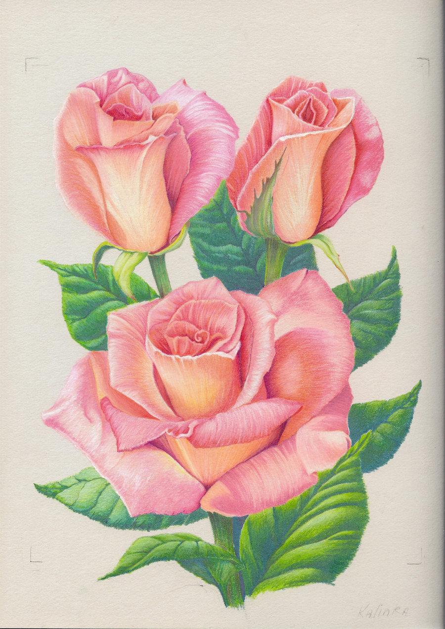 Как рисовать открытку с розой, картинки