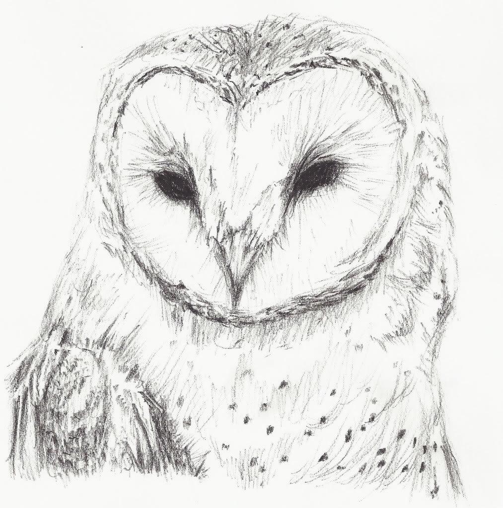 Картинки совы для рисования карандашом