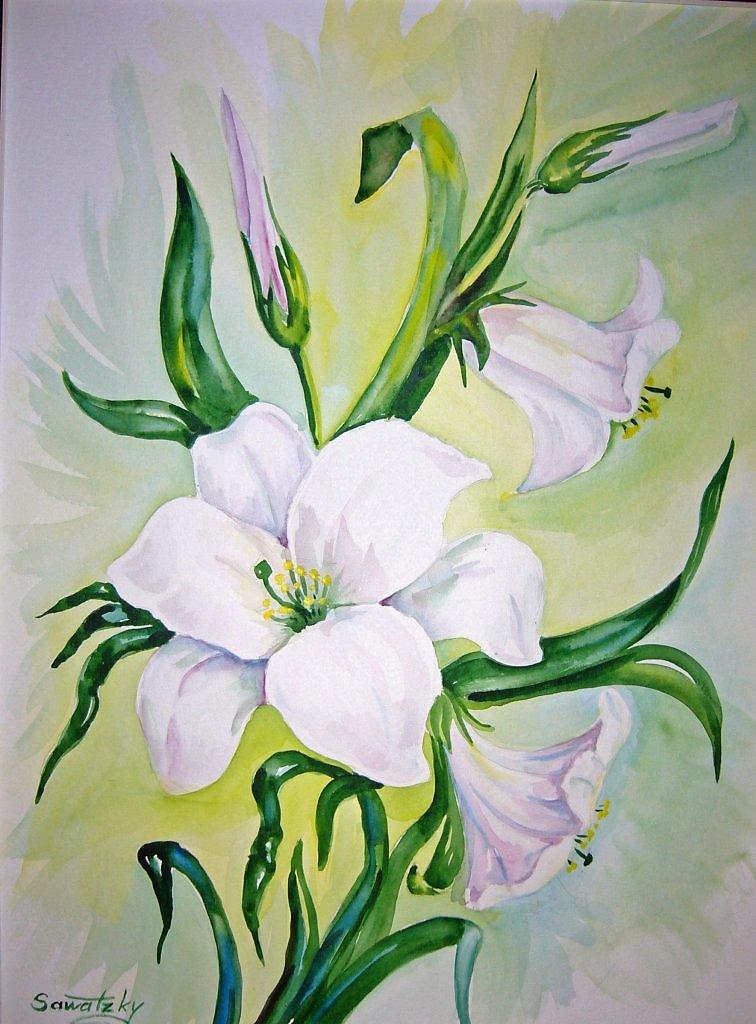 Рисованные картинки с лилиями