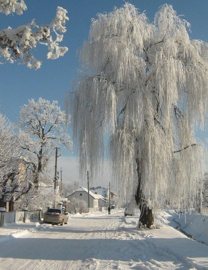 правило, врата иней на деревьях фото китайским вариантом