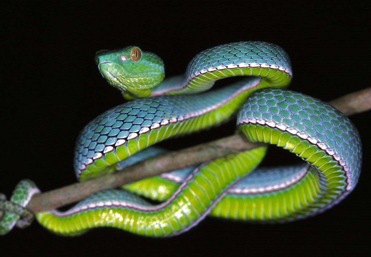 пусть картинки рисунки фото змей горячие