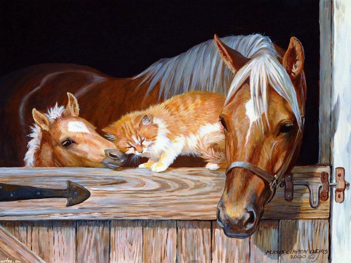 Карандашом, открытки с животными живые