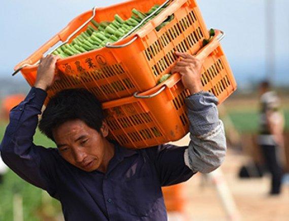Китай арендует российские дальневосточные гектары для замещения импорта американской сои