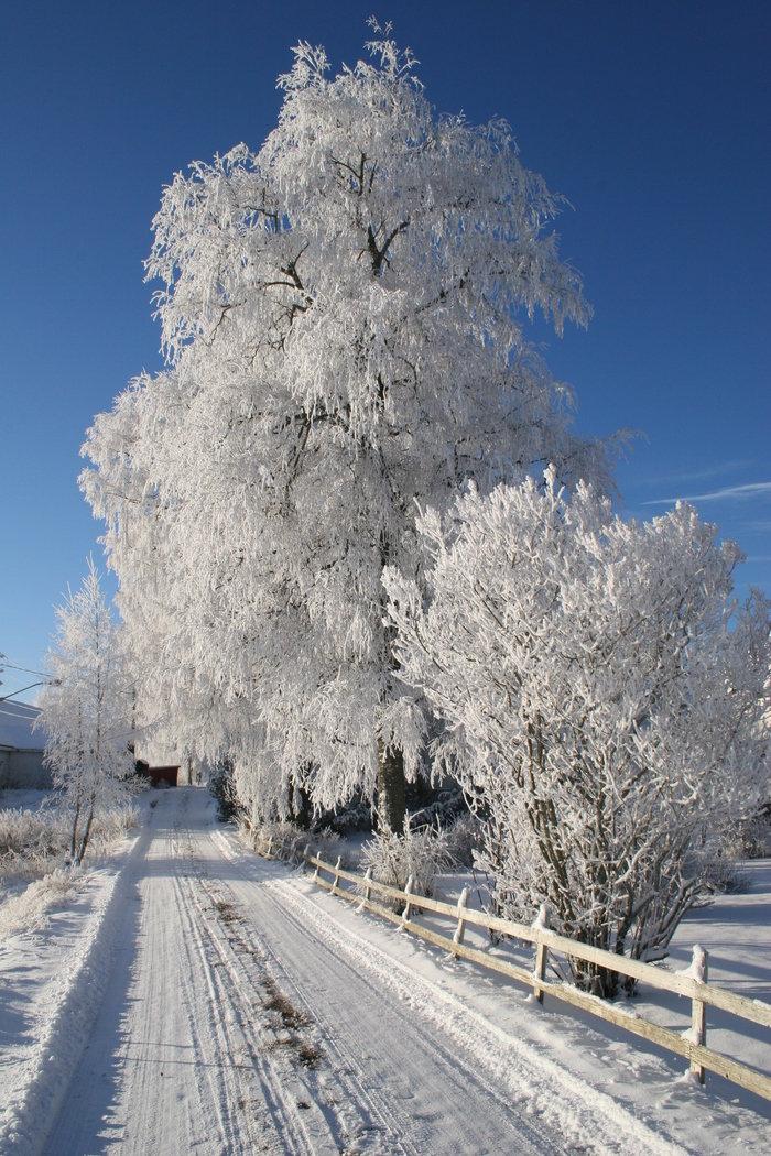 статье подробно вертикальное фото красоты зимы нержавеющей стали, имеет
