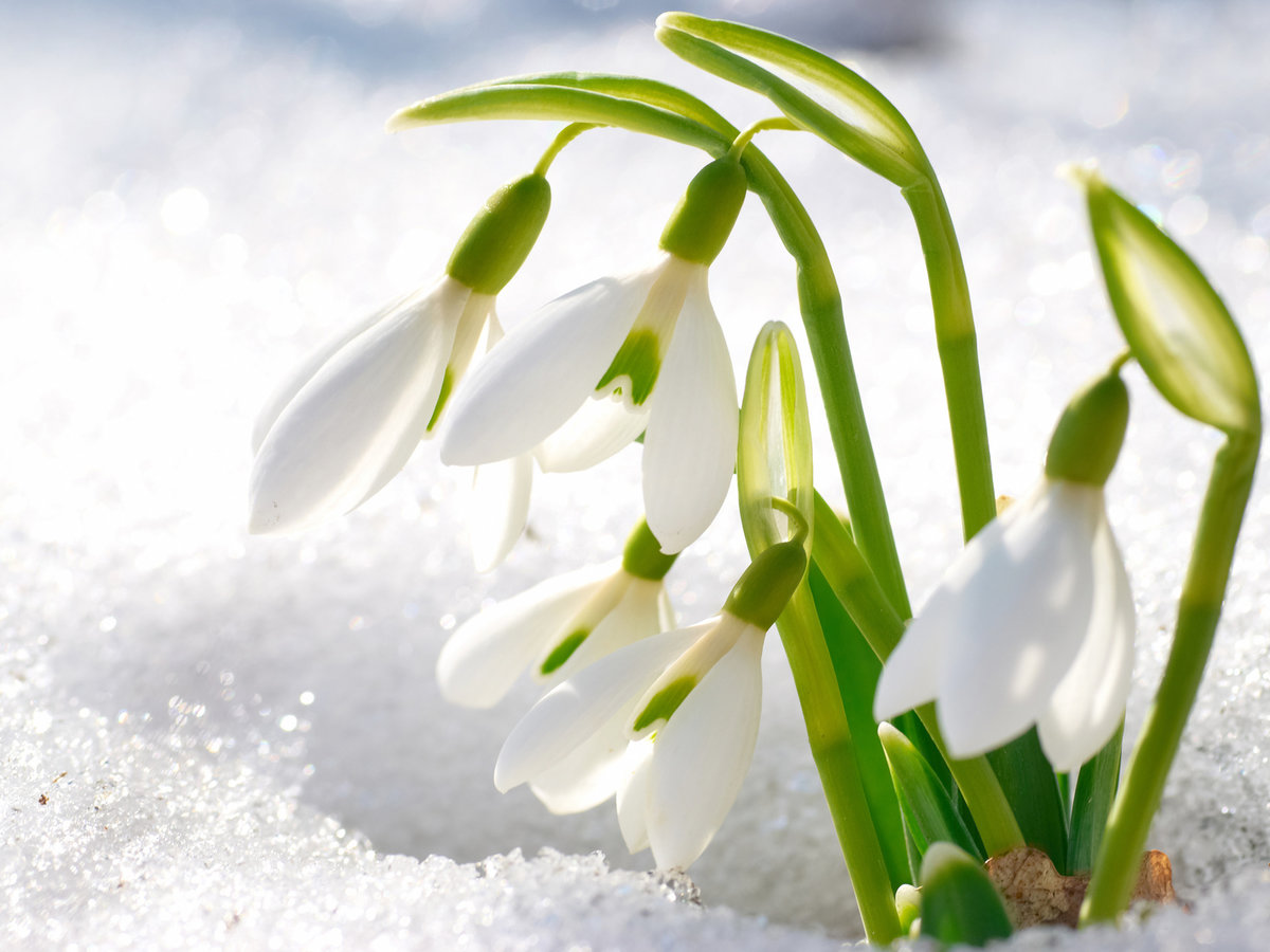 Новому году, открытки весна фото