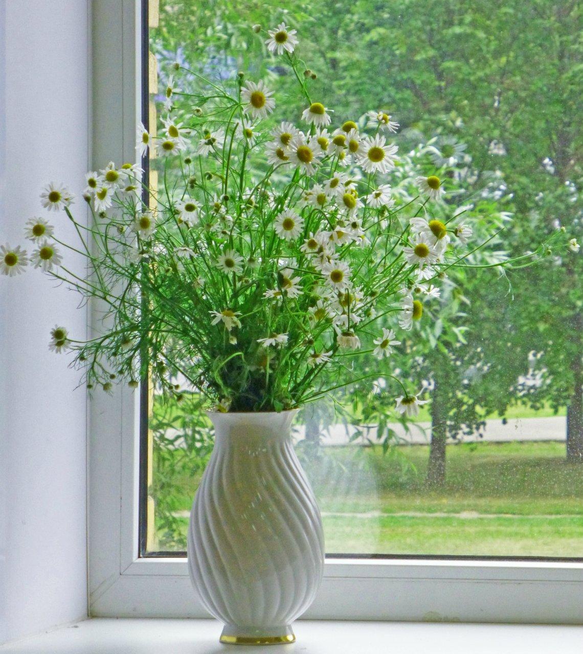 красотка картинка за окном ромашки решение