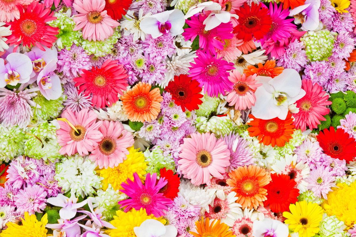 Цветы картинка