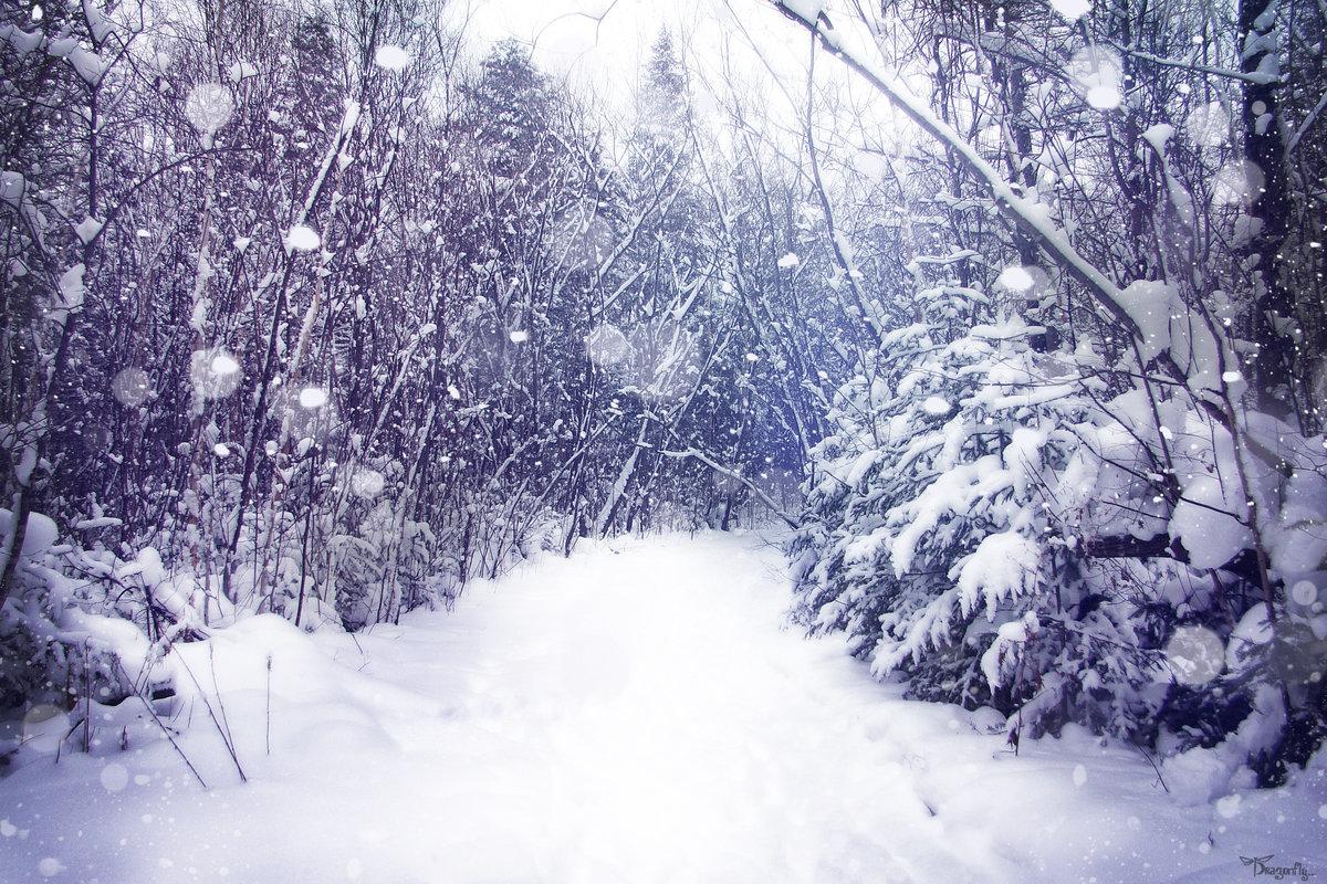Картинки падает снег в лесу