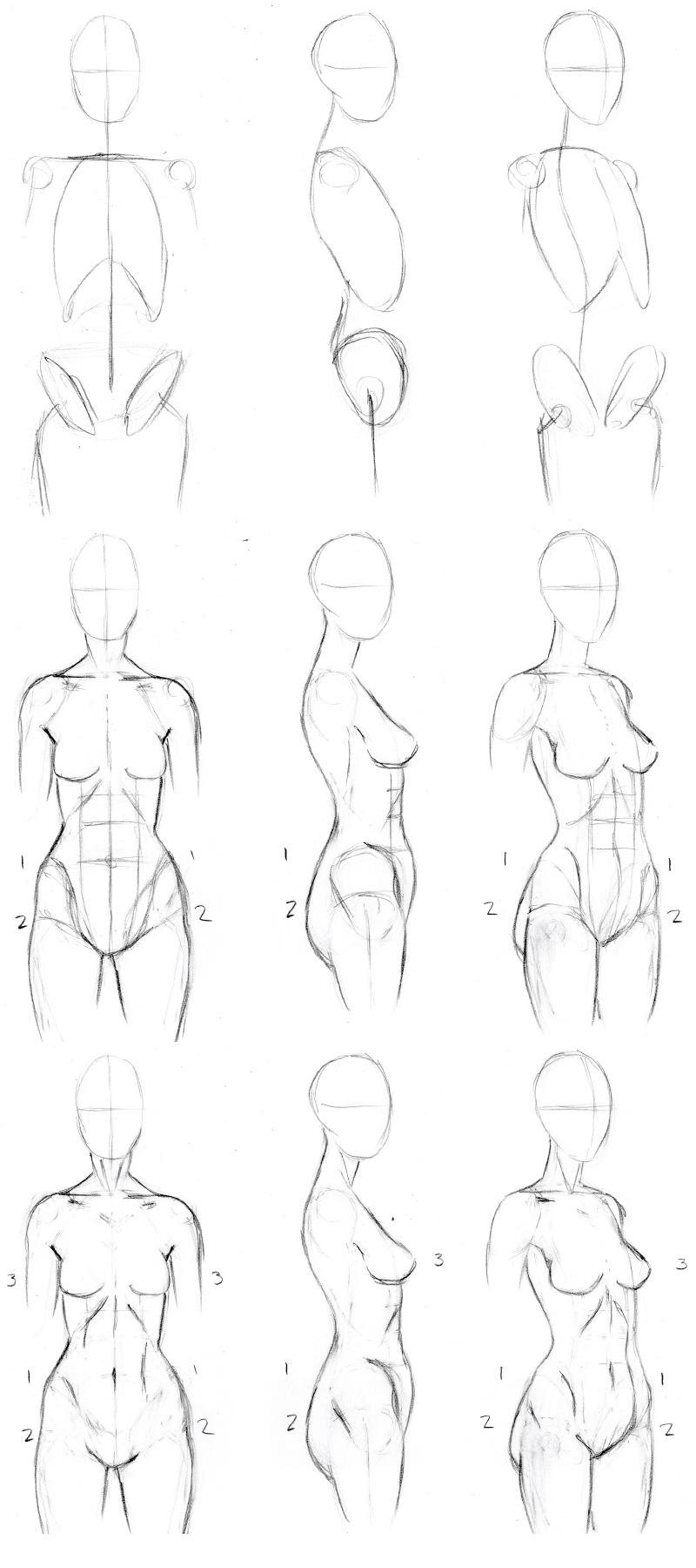 Female Drawing Anatomy Anime Dogar 5a26462e41fc
