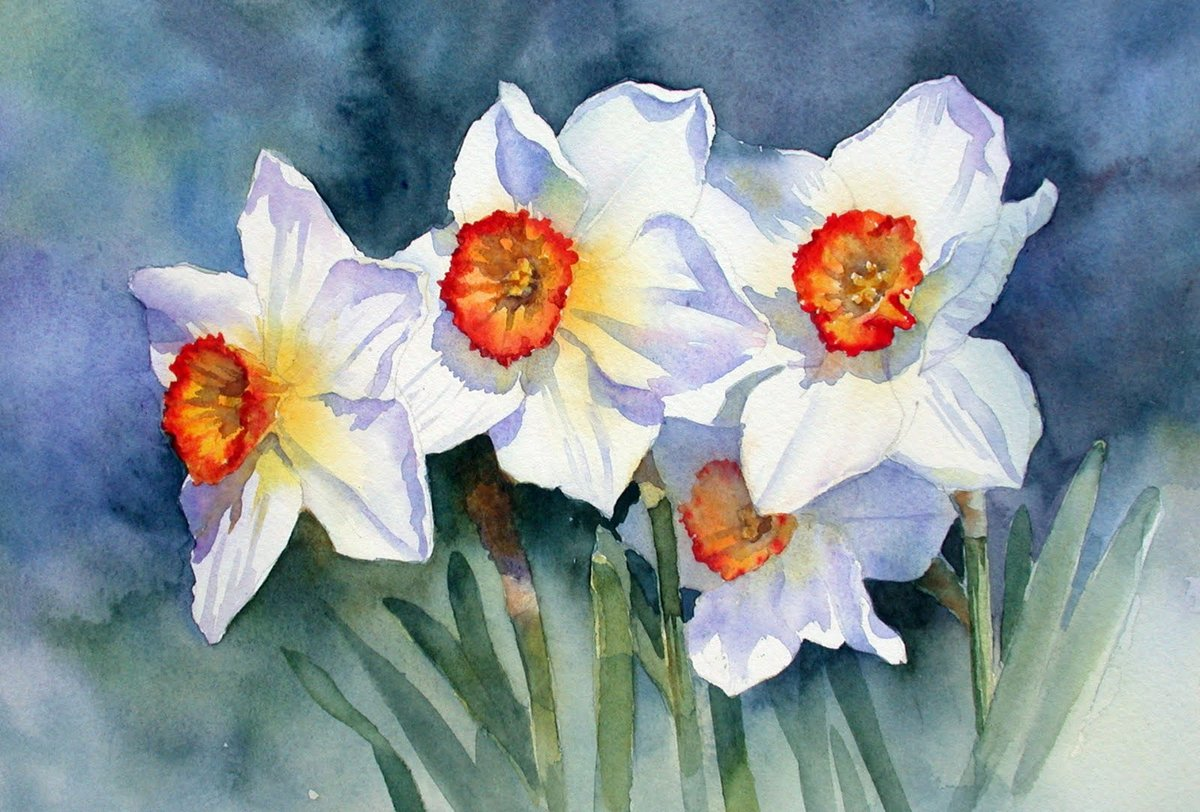 Нарцисс картинки нарисованные