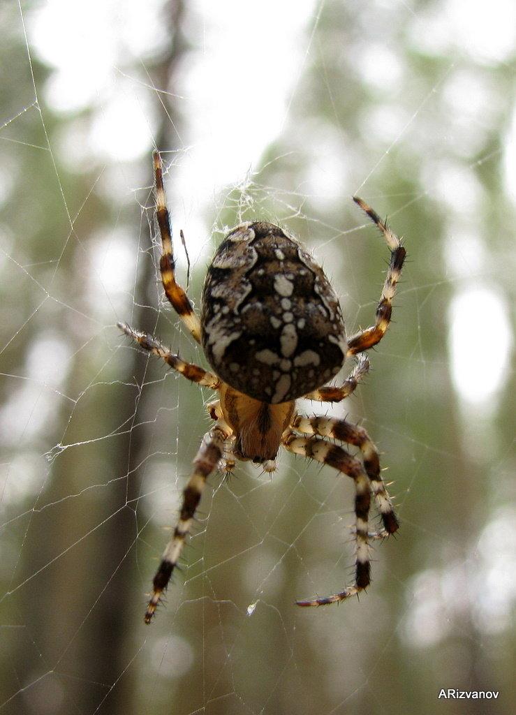 Фотографии пауков казахстана