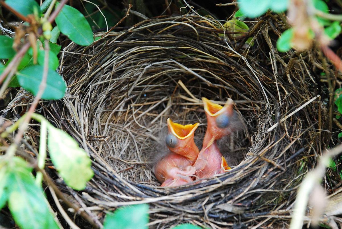 понимают, как картинки гибель птенцов это крошик