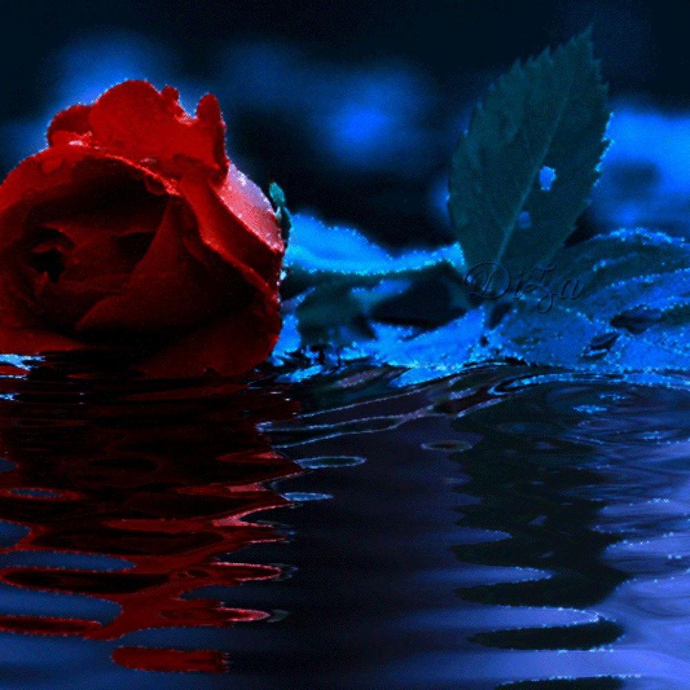 Про любовь, гифы красивые розы у воды