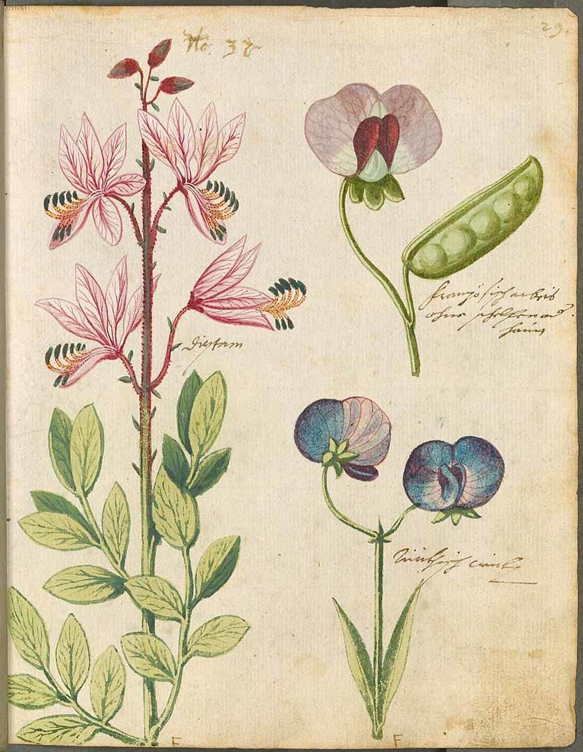 Цветы картинки ботаника