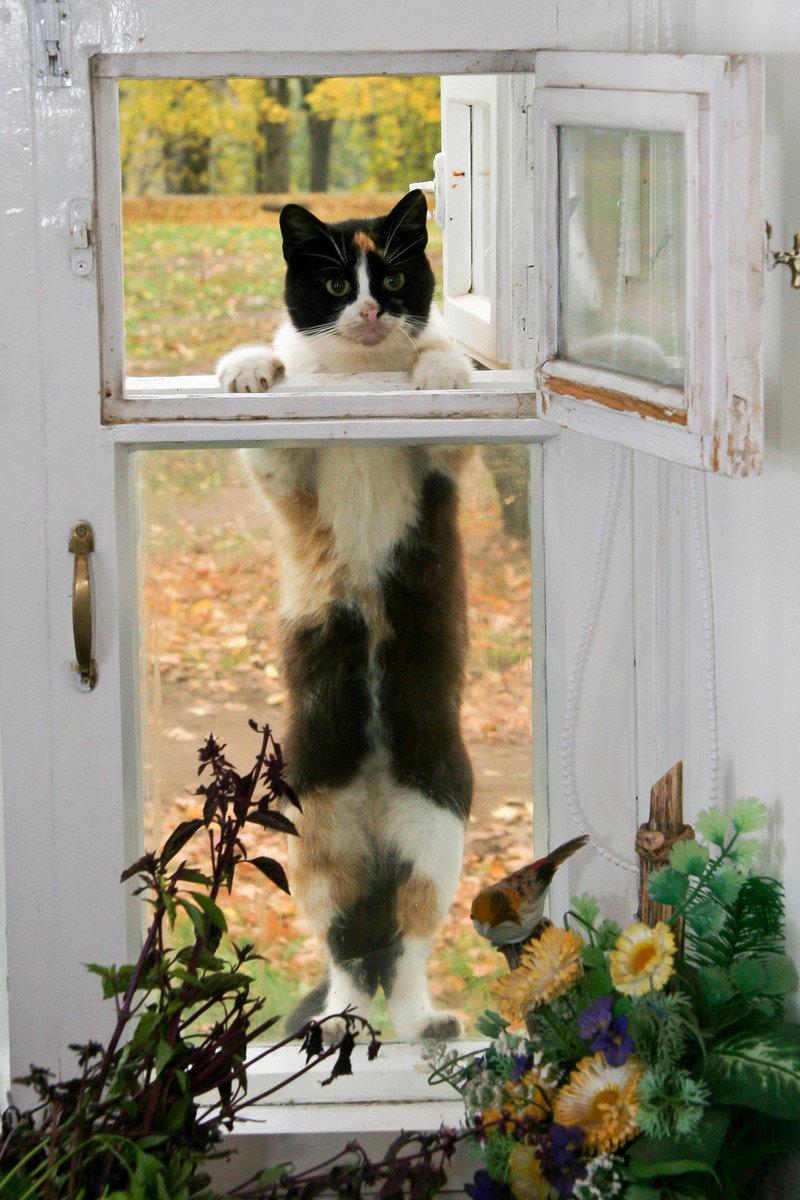 На обед#валаам #коты