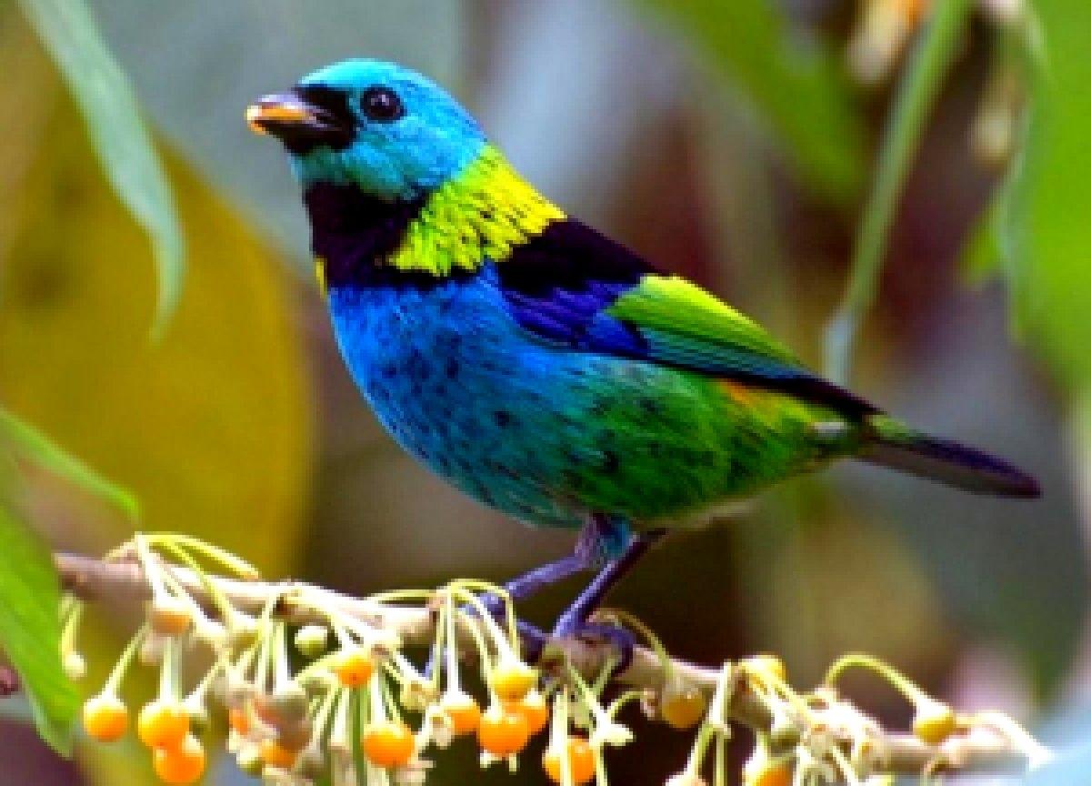 возвращения хозяйственный название и фото всех птиц в мире продаются огромных