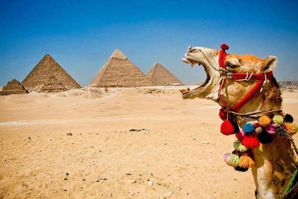 Любимому приятное, картинки с пустыней и верблюдами и пирамидами