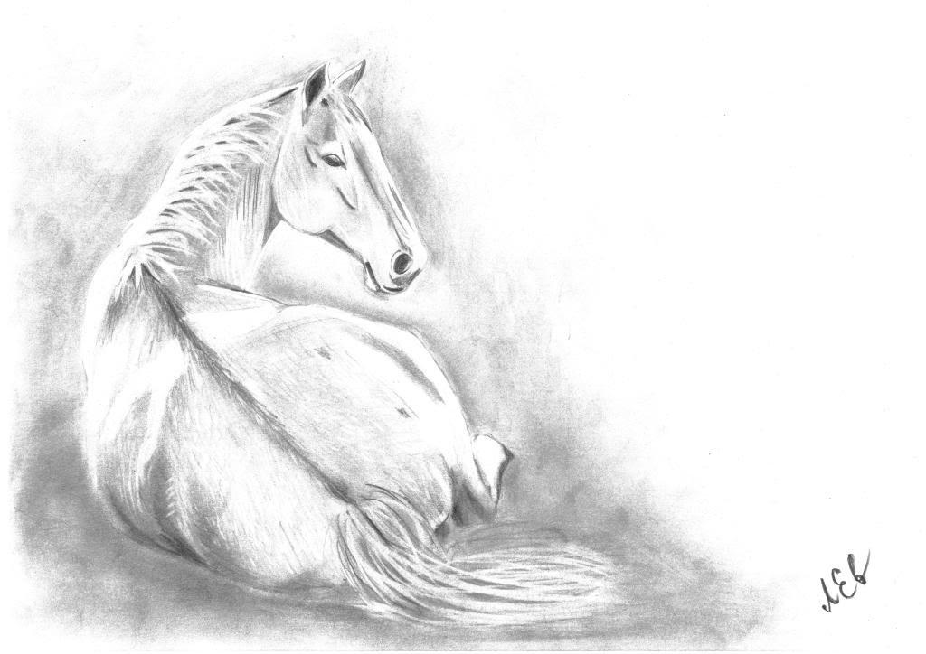 Картинки красивых лошадей нарисованных карандашом