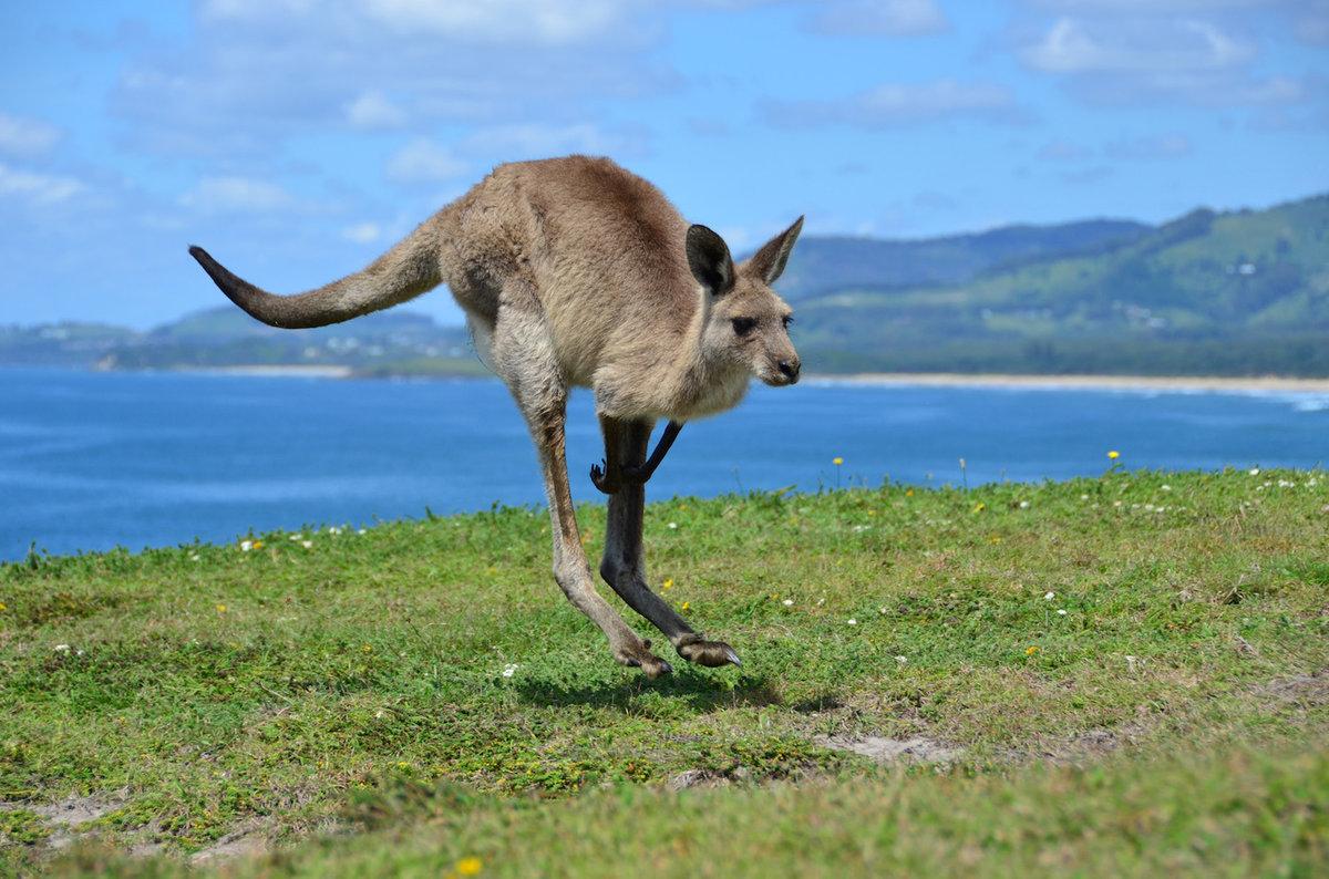 Смотреть картинки животные и растения австралии