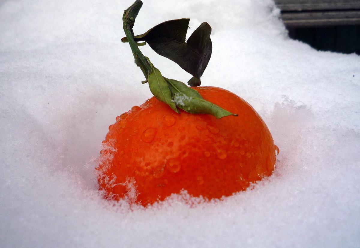 Картинка лайм и апельсин модный доступный