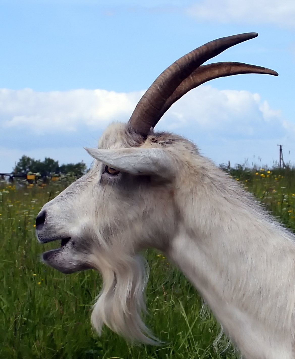 Картинка рога козы для детей
