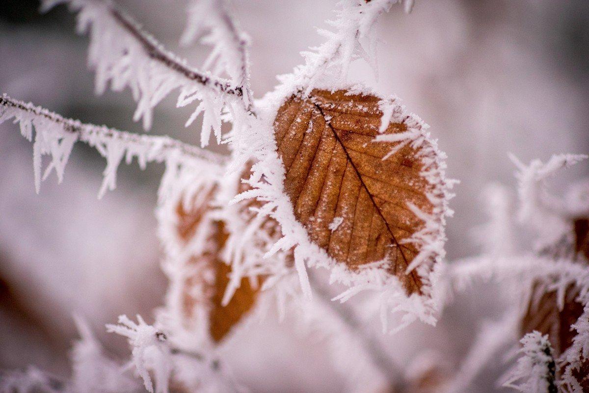 мать имеет картинки листьев зимой школьные годы