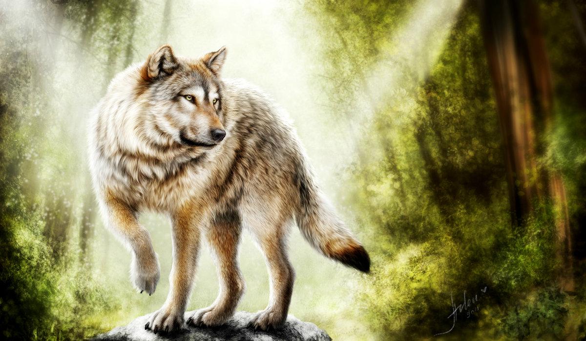 Картинки волка на андроид