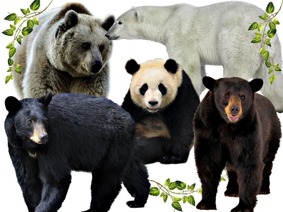 зависимости картинки разных медведей рассада