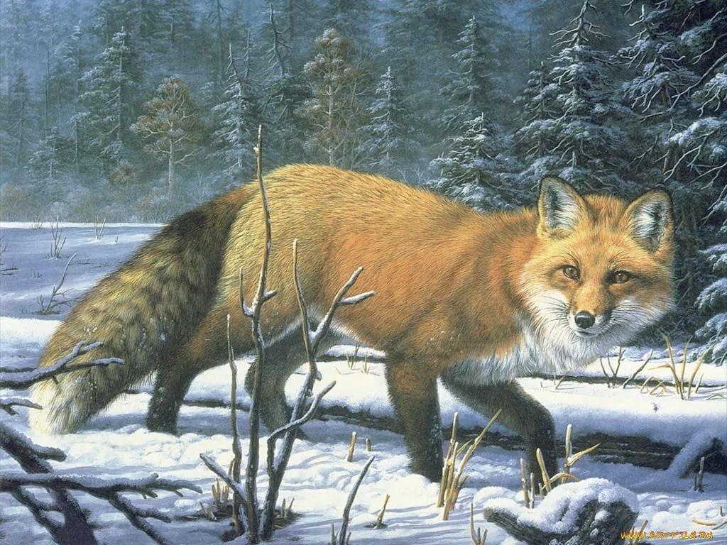 Животные леса лиса картинки для детей