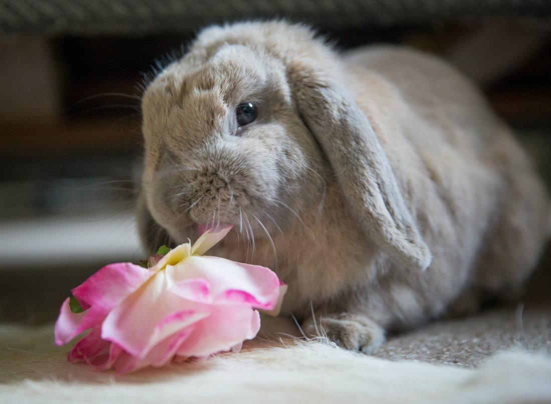 Милый заяц фото