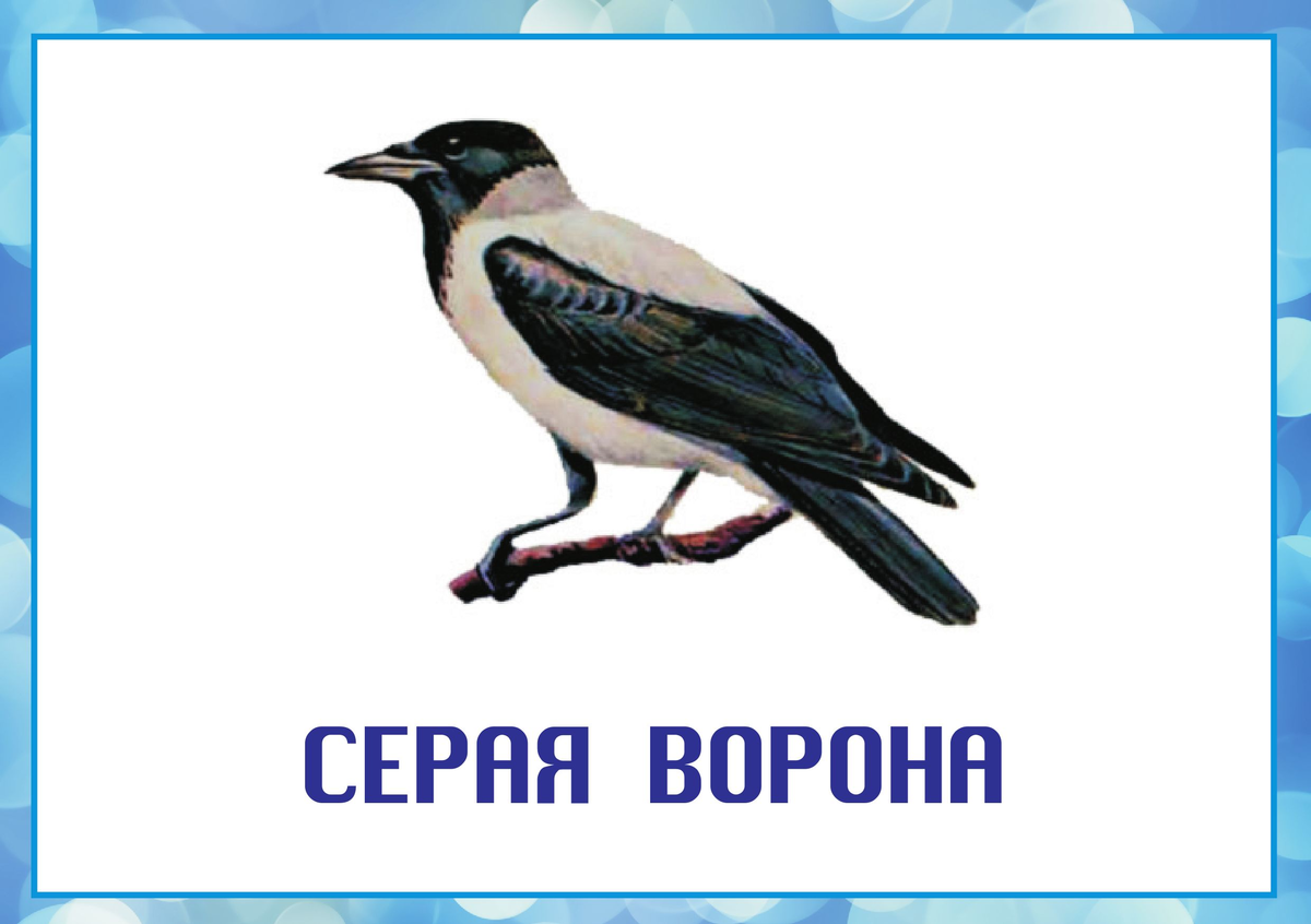 Картинки птицы зимой для детского сада