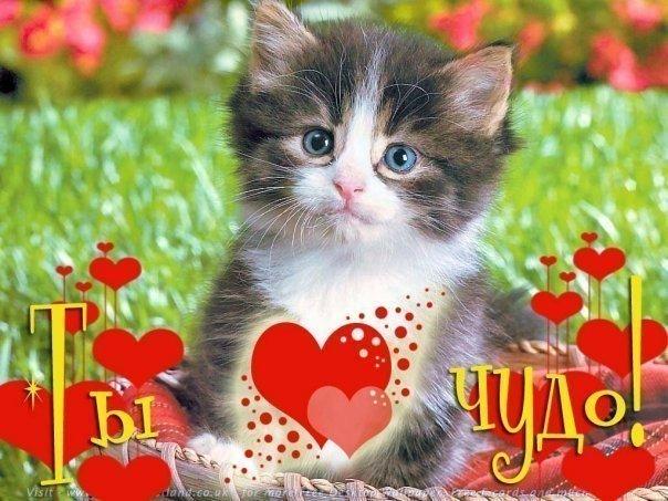 Картинка катюше 11 месяцев кот крошечными