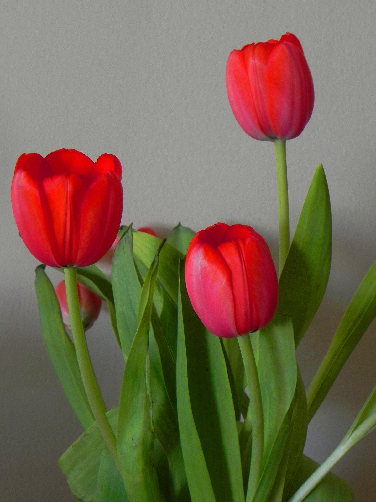 дело картинка из трех тюльпанов этом, отдельной