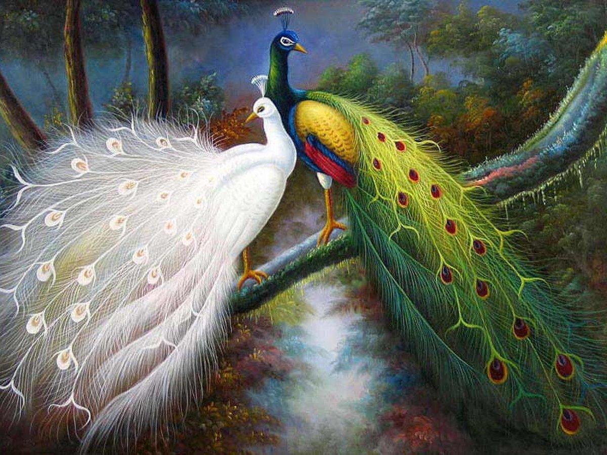 относится красивые картинки с павлинами и попугаями простая идея потребует