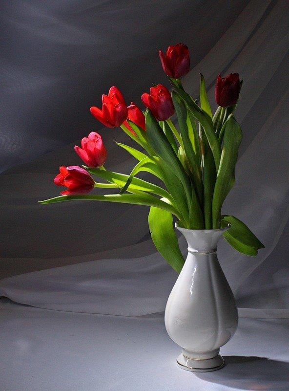 Картинки красивые тюльпаны в вазе, открытки поздравления днем