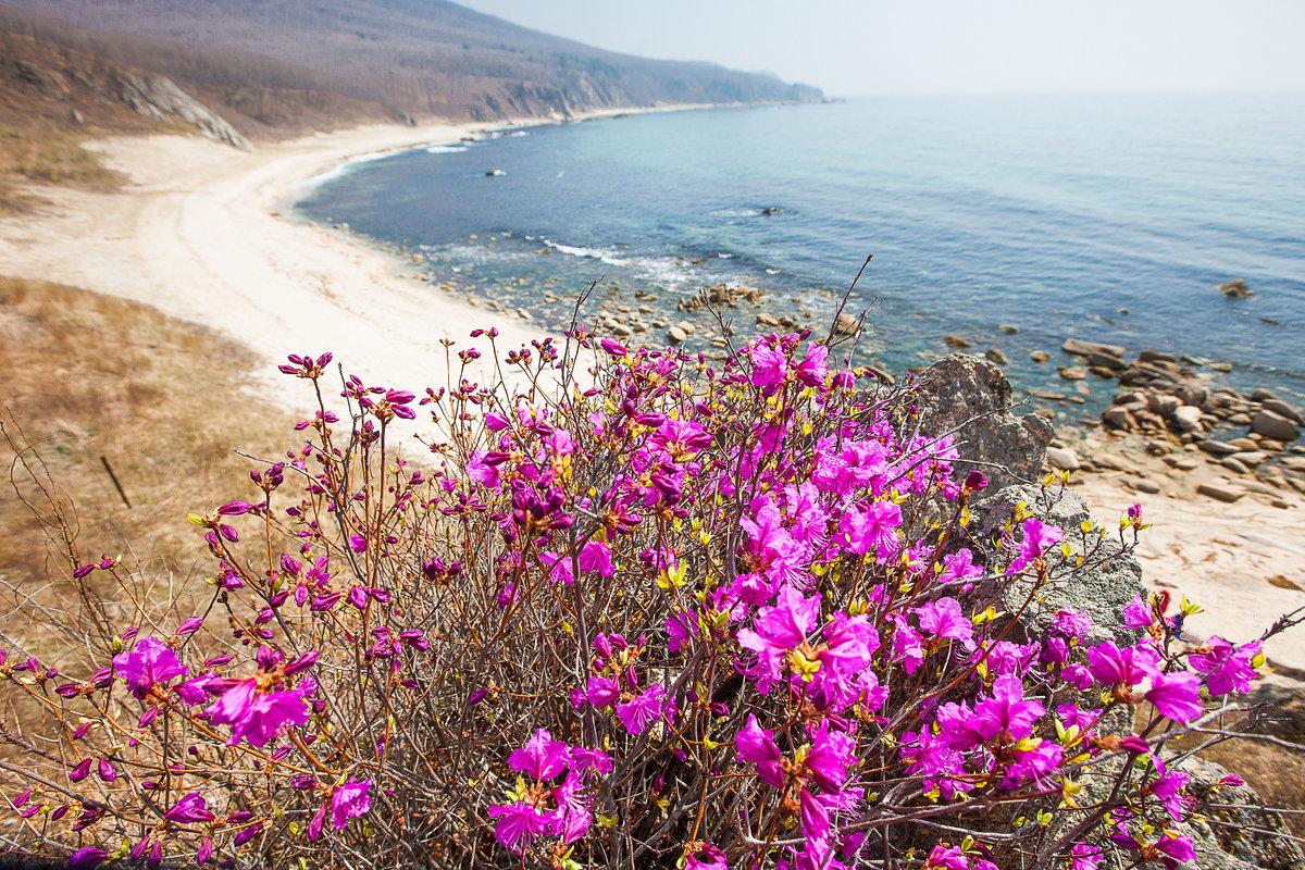 его фотографии весна в приморье содержит перечень характеристик