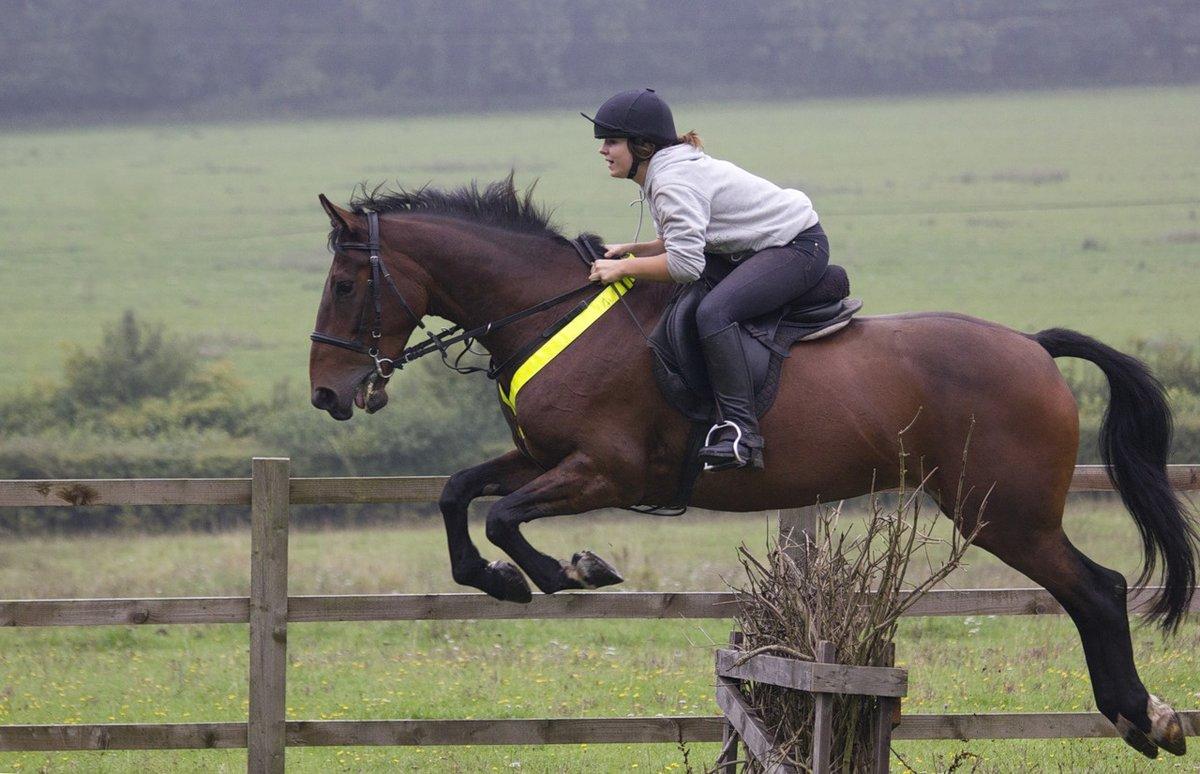 Лошадь в прыжке картинка