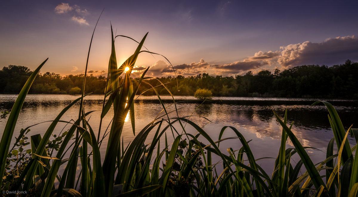 фото камыши на реке пейзаж любимый