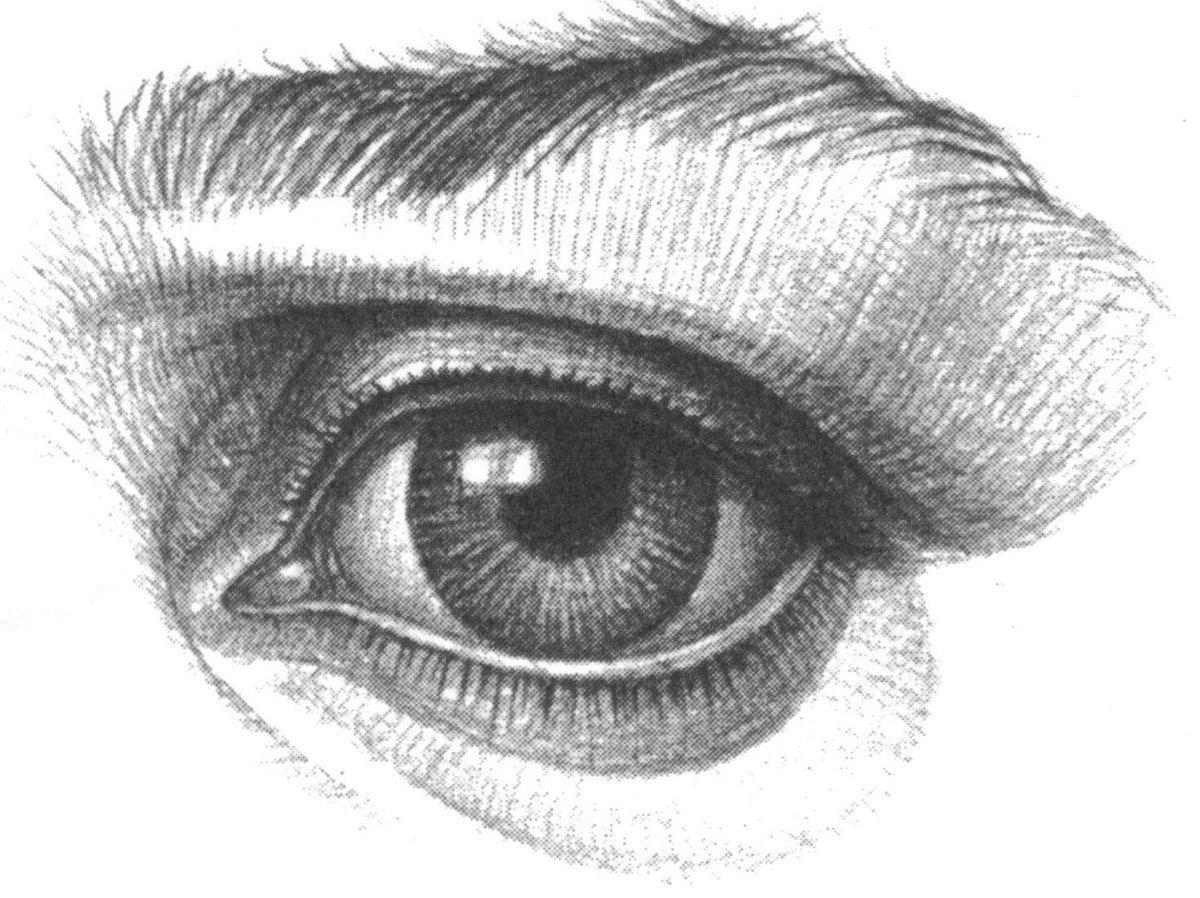 картинка глаза человека рисовать