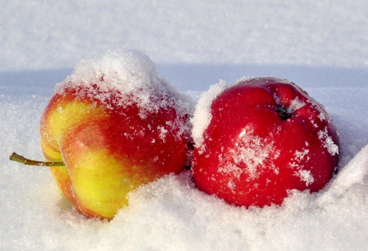 Картинки прикольное, анимация яблоки на снегу