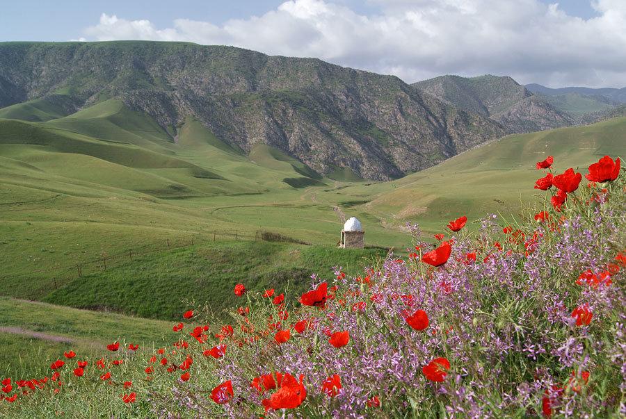 Картинки области узбекистана